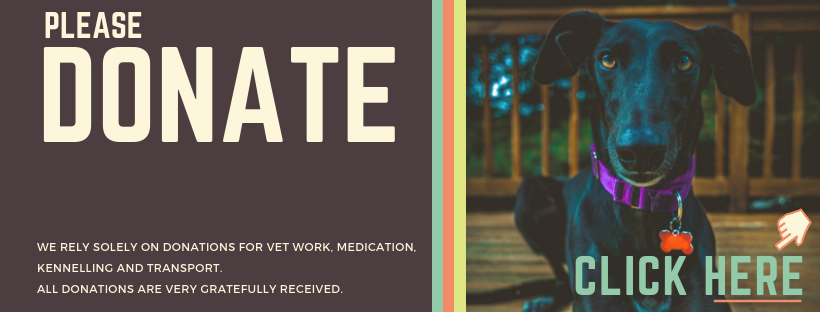 Gumtree Greys - Greyhound Rescue