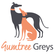 Gumtree Greys - The greyhound guardians