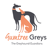 Gumtree Greys Greyhound Adoption
