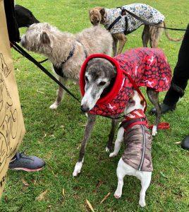 Greyhound at the markets