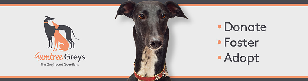 Gumtree Greys Greyhound Rescue