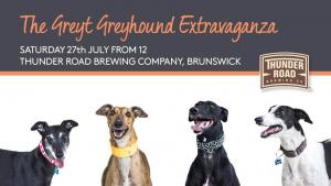 Great Greyhound Extravaganza